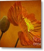 Flaming Beauty Metal Print by Heiko Koehrer-Wagner