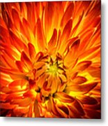 Flaming Dahlia - Paintography Metal Print