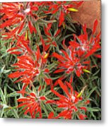 Flaming Zion Paintbrush Wildflowers Metal Print
