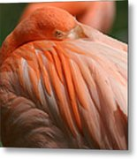 Flamingo 1 Metal Print by Maxwell Amaro