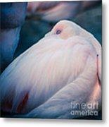 Flamingo 1b - Square Metal Print