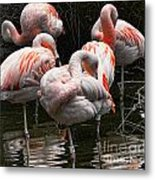 Flamingo 5 Metal Print