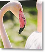 Flamingo Bird Portrait. Metal Print