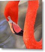 Flamingo Curves Metal Print