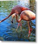 Flamingo Duo Metal Print