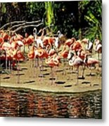 Flamingo Family Reunion Metal Print by Karen Wiles