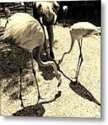 Flamingo Feeding Fest Metal Print