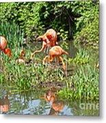 Flamingo Island Metal Print