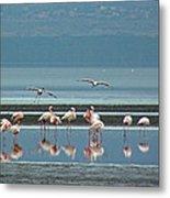 Flamingo On Lake Nakuru Metal Print