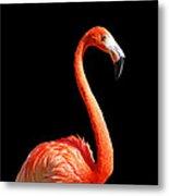 Flamingo Portrait Metal Print