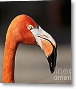 Flamingo Portrait Metal Print