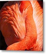 Flamingo Resting Metal Print