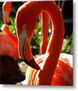 Flamingo Metal Print by Tammy Wallace