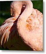 Flamingo Twist Metal Print