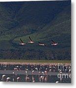 Flamingos  #6590 Metal Print