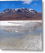 Flamingos At The Altiplano In A Salt Lake Metal Print