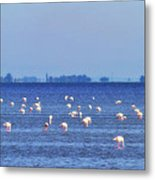 Flamingos In The Pond Metal Print