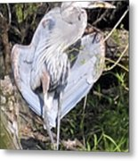 Flasher In The Park Metal Print