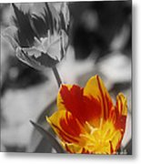 Flashy Tulips Metal Print