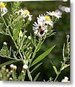 Fleabane Bee Metal Print