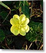 Fleur Jaune Couverte De Rosee Metal Print