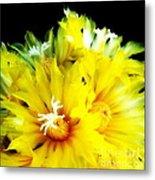 Fleurs De Cactus 2 Metal Print