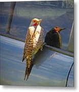 Yellow Shafted Northern Flicker Hanging Around Metal Print