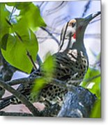 Flicker In The Lilacs Metal Print