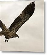Flight Of The Brown Kite V7 Metal Print