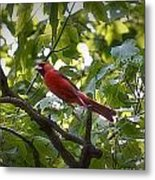 Flight Of The Cardinal Metal Print