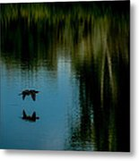 Flight Of The Cormorant Metal Print