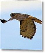 Flight Of The Hawk Metal Print