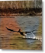 Flight Of The Pelican-featured In Wildlife-newbies And Comfortable Art Groups Metal Print