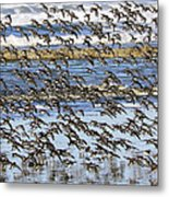 Flight Of The Pipers Metal Print