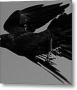 Flight Of The Raven Metal Print