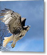 Flight Of The Red Tail Metal Print