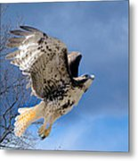 Flight Of The Red Tail Square Metal Print by Bill Wakeley