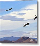 Flight Of The Sandhill Cranes Metal Print by Mike  Dawson