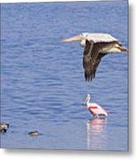 Flight Of The Pelican Metal Print