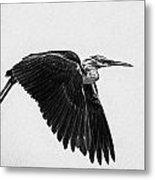 Flight Of The White Necked Heron V2 Metal Print
