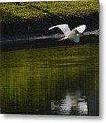 Flight Over Pond Metal Print