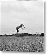 Flight Over The River Of Grass Metal Print
