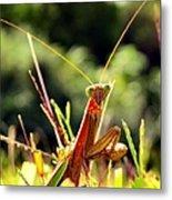 Flirty Mantis Metal Print