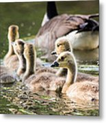 Floating Along The Pond Metal Print