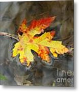 Floating Autumn Leaf Metal Print