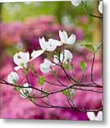 Floating Dogwood Metal Print