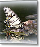Floating In Water - Swallowtail -butterfly Metal Print