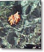 Floating Leaf Metal Print