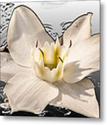 Floating Lily Metal Print