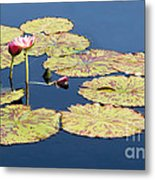 Floating On The Breath Metal Print